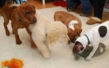 puppy_socials